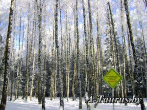граница заповедника Прилепский в Лесной